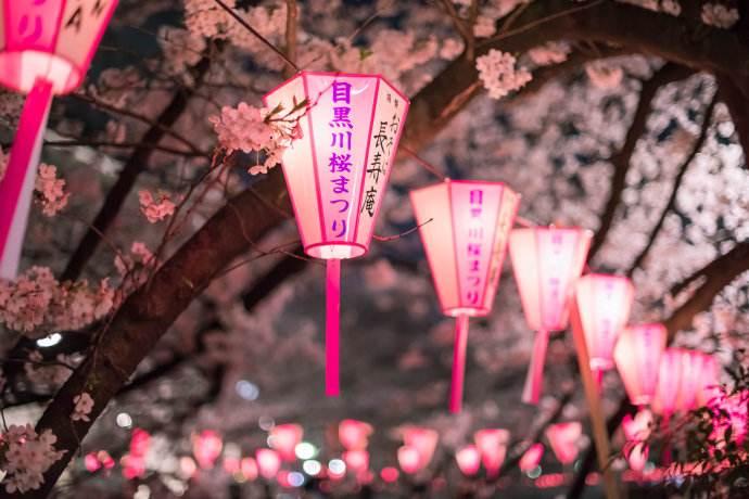 家乡的樱花开了什么梗 暗示主播家乡在日本